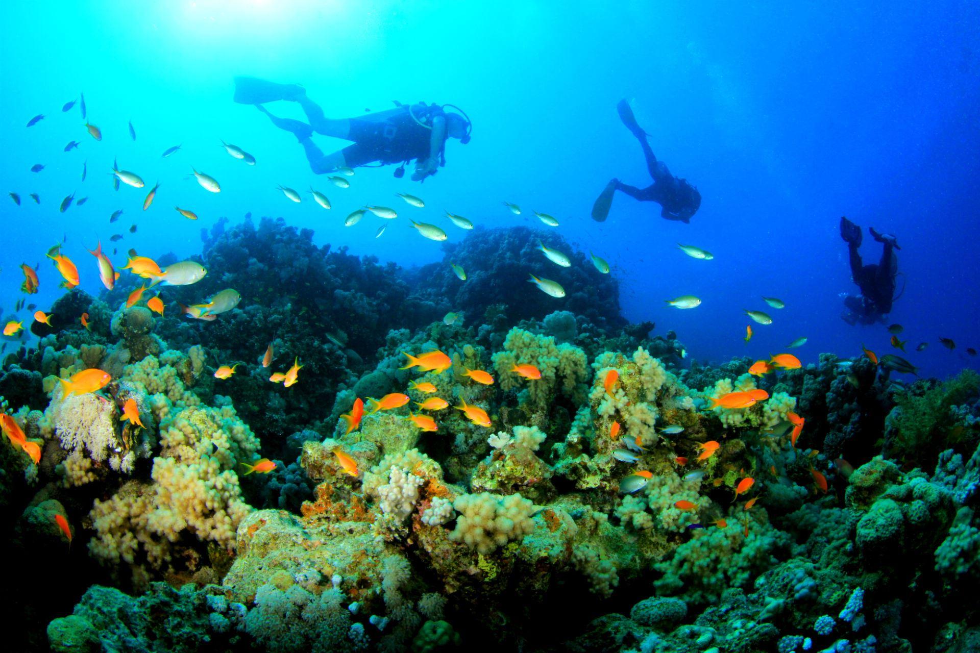 curso de buceo PADI open water en calpe