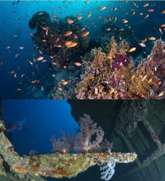 itirinario viaje mar rojo norte noviembre 2018 Dive & Dive Calpe 2